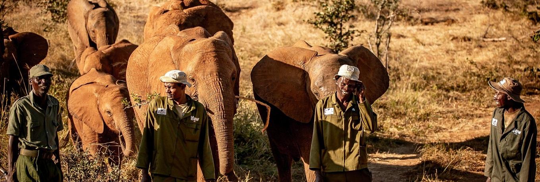Zimbabwe Elephant Nursery