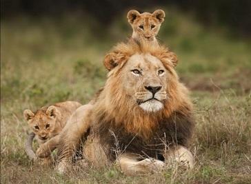 Lion And Cheetah Park, Harare